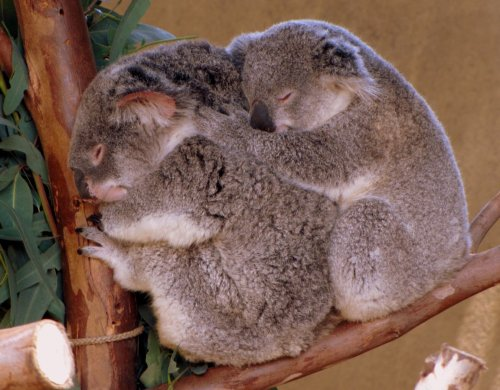 Spooning at the Zoo.